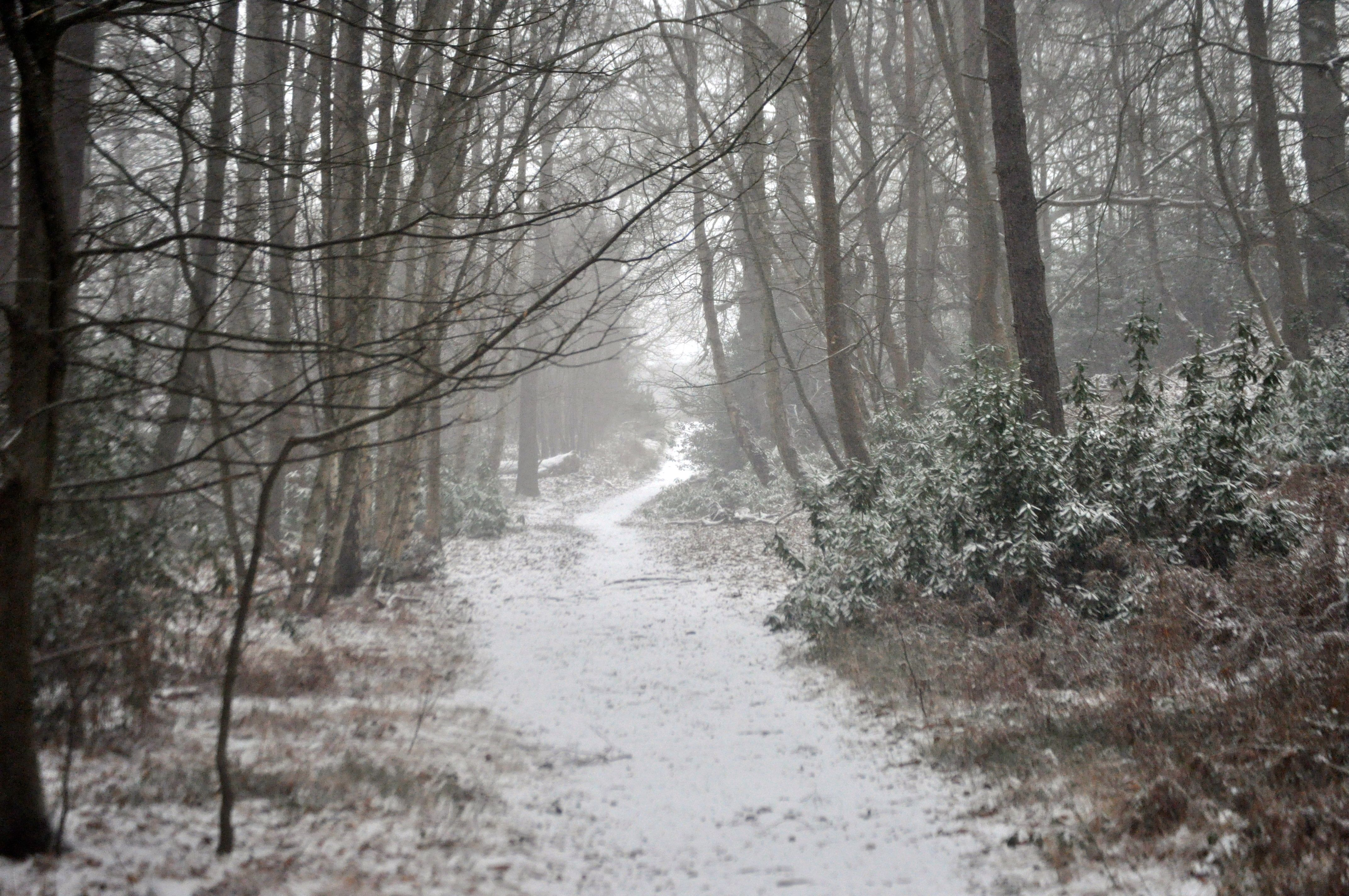 stopping by the woods on a snowy evening essay rush school stopping by the woods on a snowy evening essay
