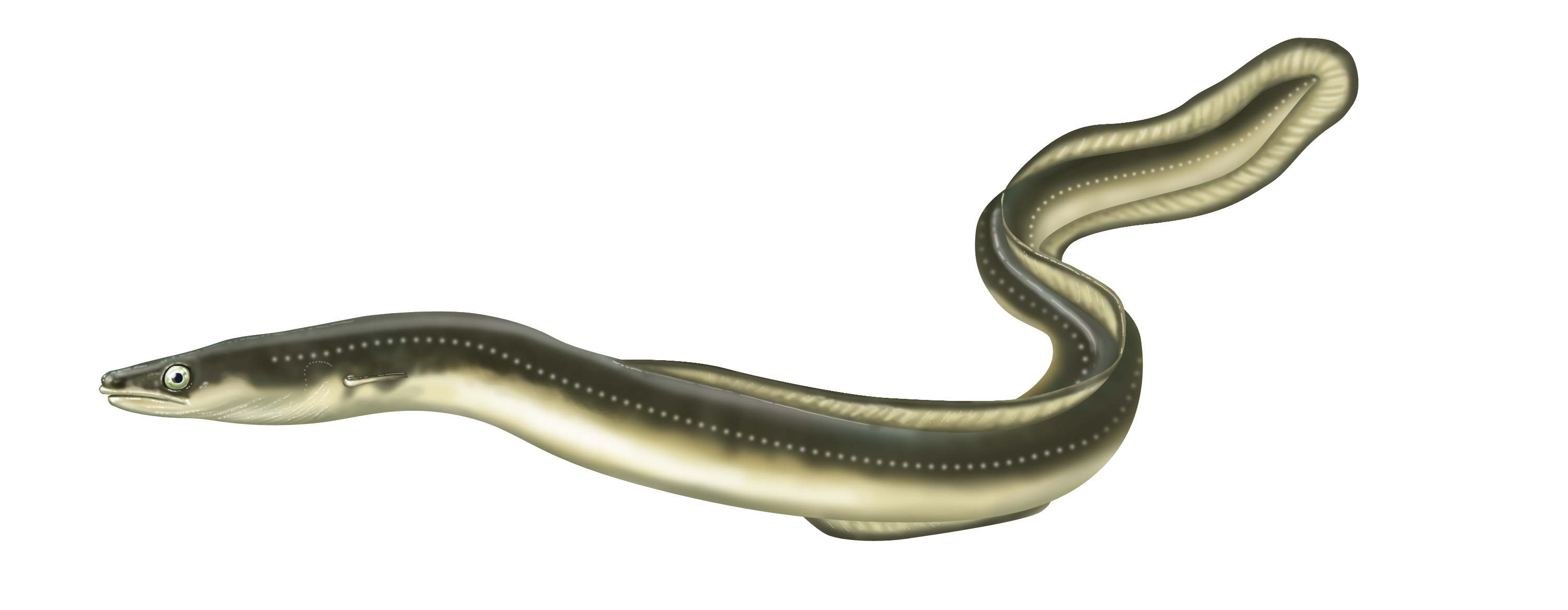 023 EKANS 023 312442503 together with Jafar further Stock Illustration Illustration Of Cute Green Snake likewise Junglebook3 in addition Kaa Recolor Eyes 496684100. on cartoon snake
